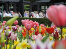 Le jardin Keukenhof  Amsterdam  crdit photo  www.keukenhof.nl